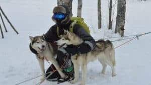 Schlittenhunde in Murmansk